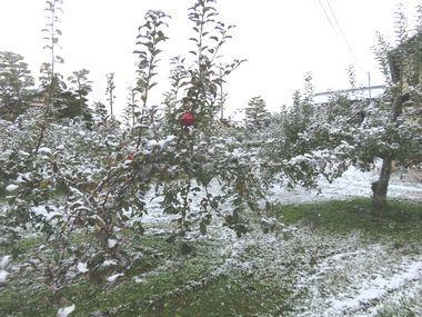 IMG_4878雪