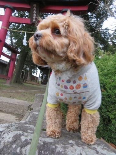 IMG_5159朝散歩