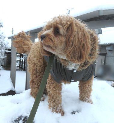 IMG_5285雪道散歩