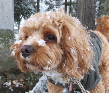 IMG_5298顔に雪
