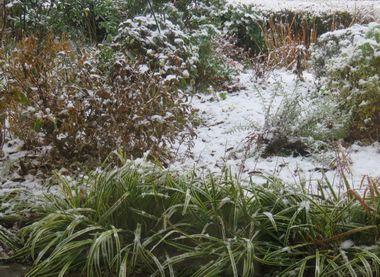 IMG_5391雪
