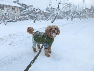 IMG_5907雪道散歩