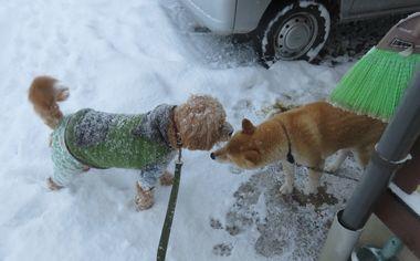 IMG_5908雪道散歩