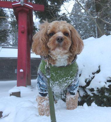 IMG_5913雪道散歩