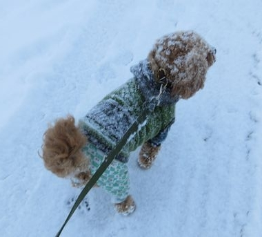 IMG_5914雪道散歩
