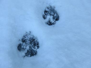 IMG_5915雪道散歩
