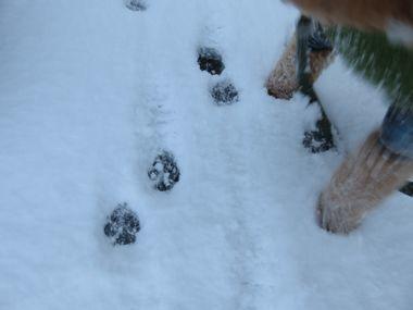 IMG_5916雪道散歩