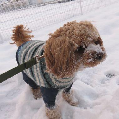 IMG_6245雪道散歩