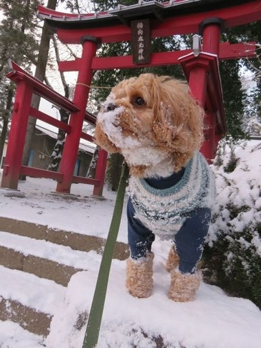 IMG_6249雪道散歩