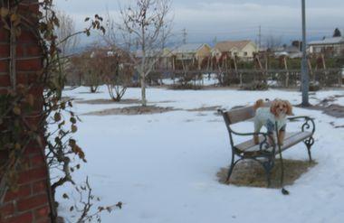 IMG_6289バラ公園