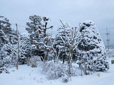 IMG_6296雪