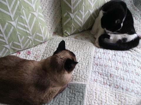 猫 くつろぐ
