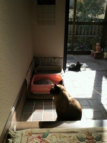 猫 日照時間