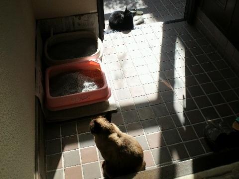 猫 玄関で日光に当たる