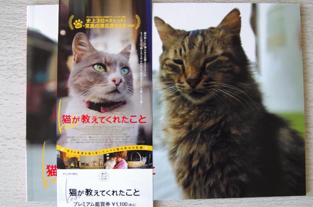 猫が・・jpg