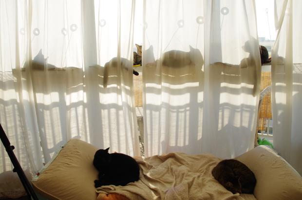 窓ベッド3