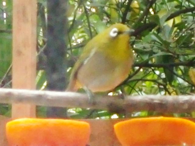 小鳥たち ②