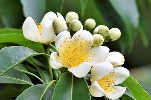 2259d53141399a梅雨の花々