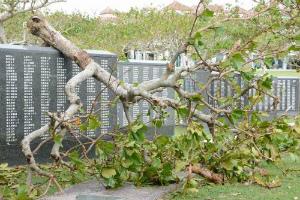 4c5fb7bd52b807b8369c26dd99a25c2a平和の礎に寄りかかるように倒れているコバテイシの木