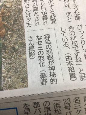 東愛知新聞 セミ 羽化 豊川 御津 花屋 花夢