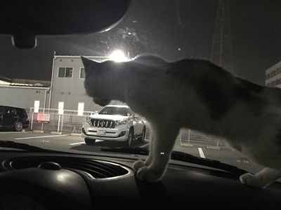 保護猫 (1)