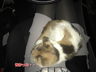 保護猫 (5)
