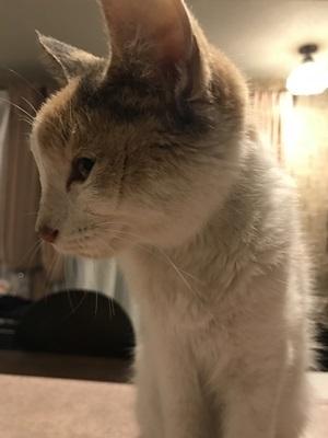 保護猫 (8)