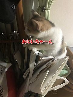 実家 (4)