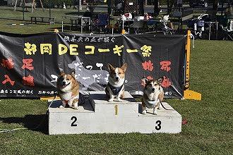 静岡DEコーギー祭り30m走シニアの部第2位