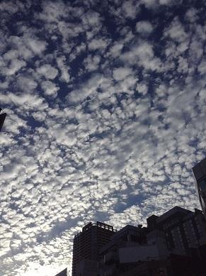 圧巻のウロコ雲