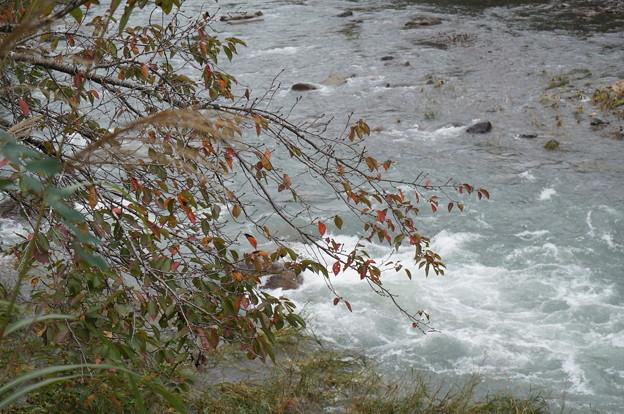 紅葉した桜と川