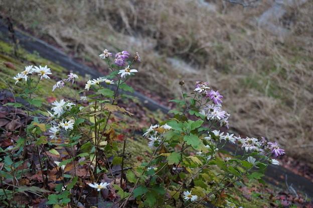 川辺に咲く花