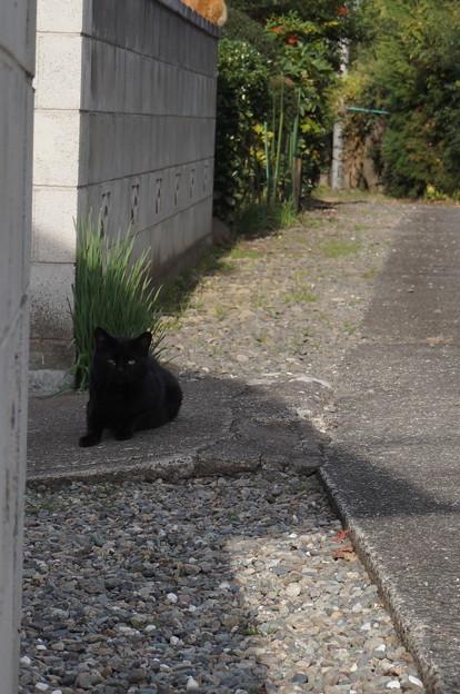 カメラに気づいた黒猫さん