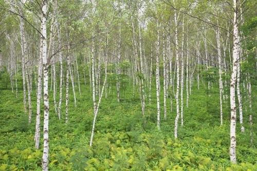【北海道の森林が続々買収されている(写真:時事通信フォト)】