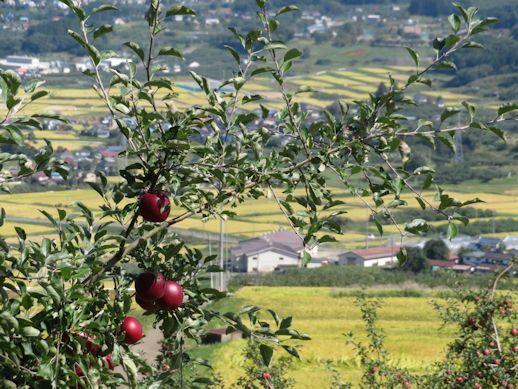 リンゴと 飯綱町