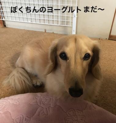 fc2blog_201811141336265f5.jpg