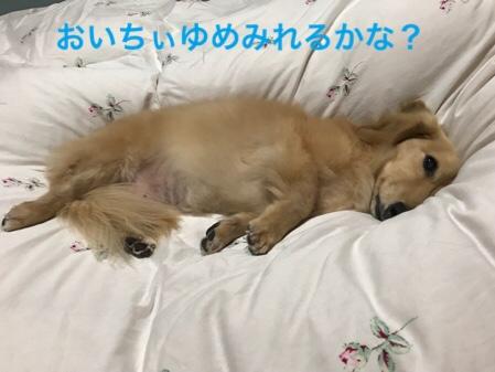fc2blog_2018120422555611b.jpg