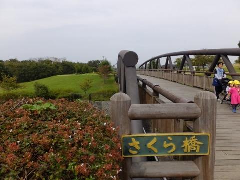 鳩川さくら橋