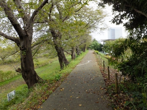 鳩川左岸堤防散策路