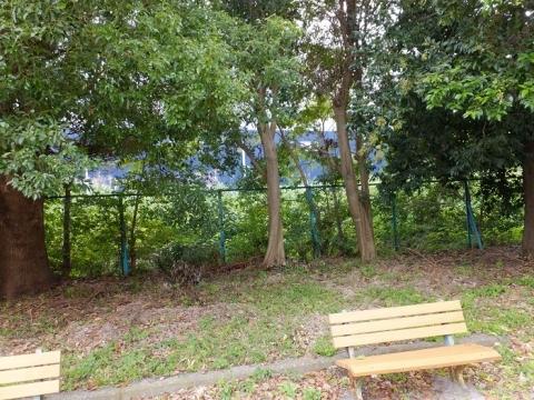 下今泉第1児童公園沿いの相模川旧堤防