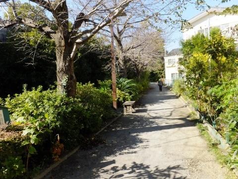 倉見桜緑道