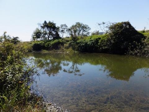 相模川のワンド・永池川河口付近