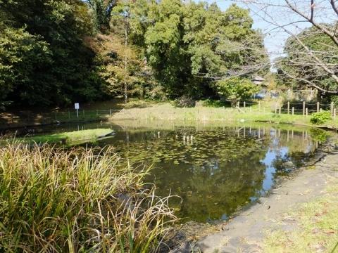 山際親水広場とんぼの池