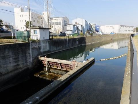 鳩川の海老名分水路