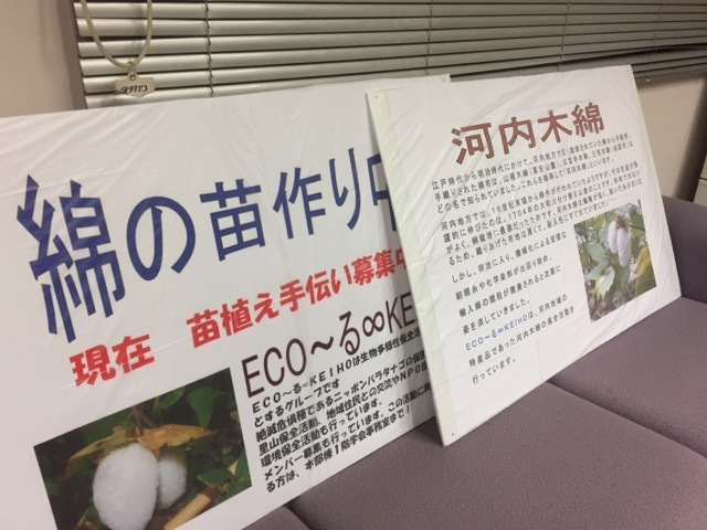 明日は綿の苗作りイベントを行います!