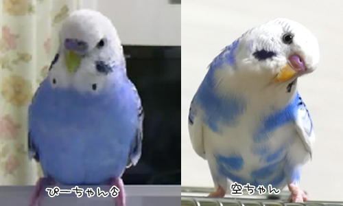 バイバイ空ちゃん_5