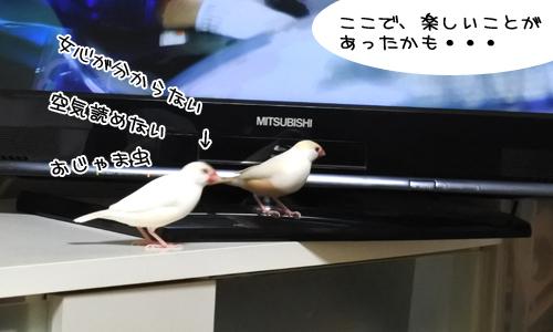 ぴのしゃんはアンニュイ_4