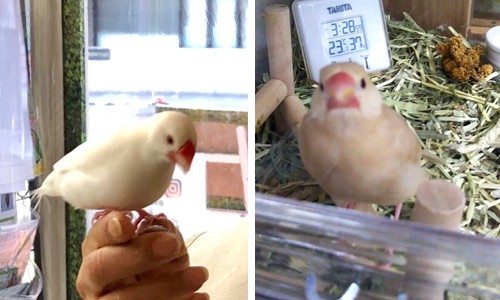 鳥好きにはたまらない_4