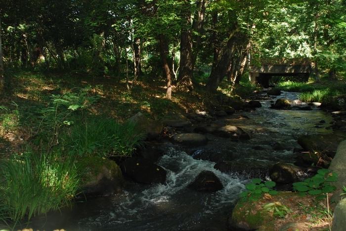 万葉の森3