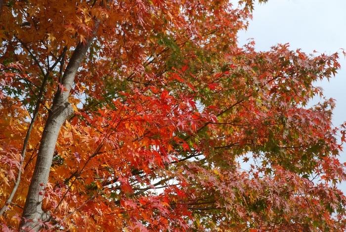 広瀬湖の秋58